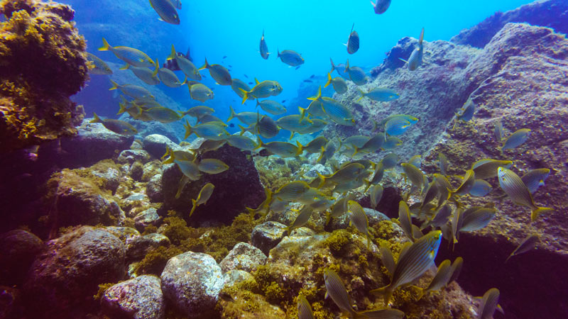 Abades Dive Site - fish full