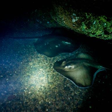 Abama Cave Rays