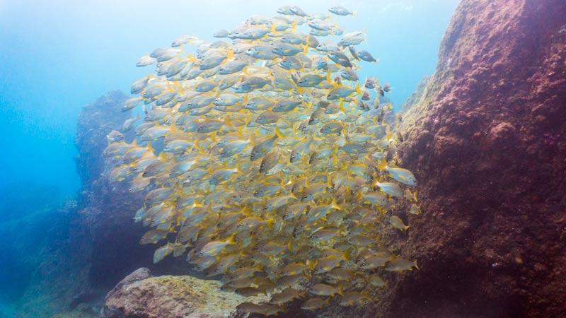 Alcala Dive Site Fishes