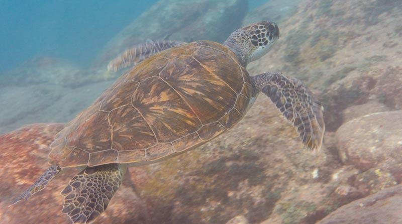 Alcala Dive Site Turtle