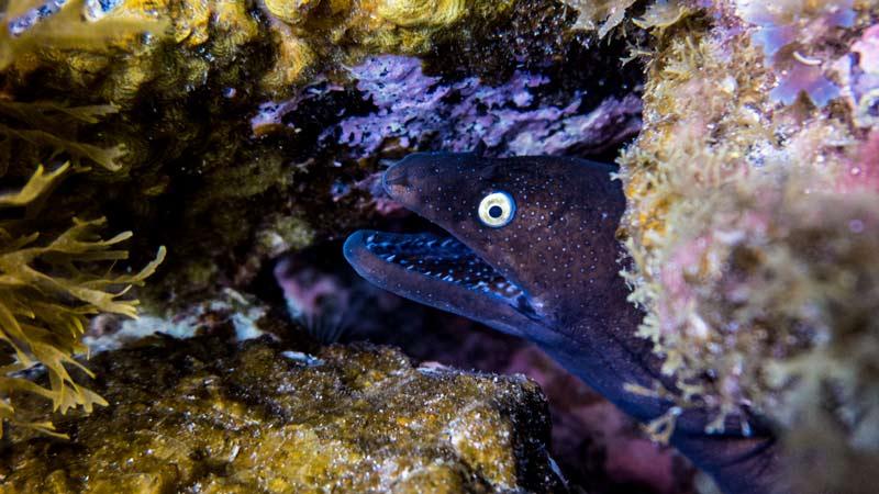 La Caleta Dive Site - moray