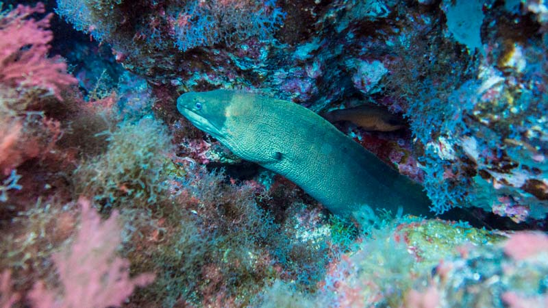 La Caleta Dive site - moray