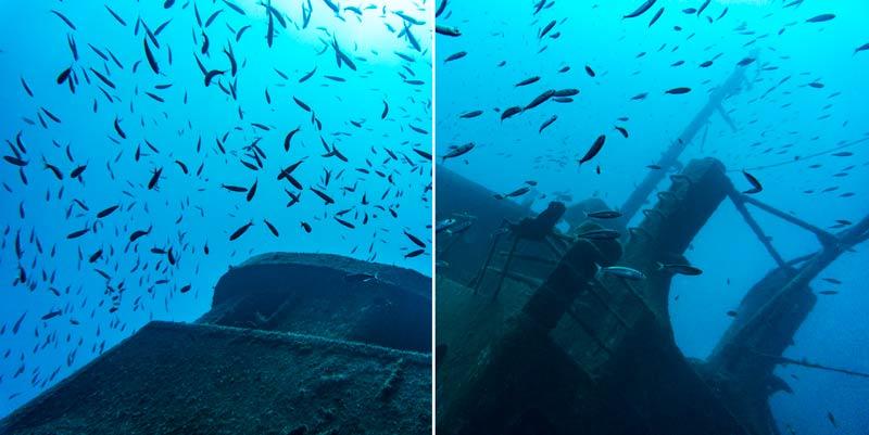 Tabaiba Dive Site Full of Fish