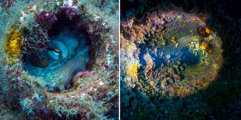 Tabaiba Dive Site Wholes