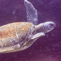 Alcala Turtle Reef