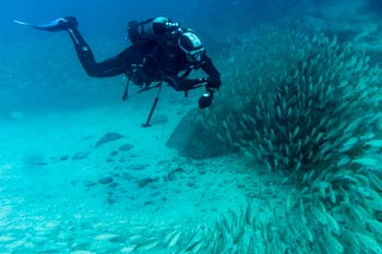Diver in front of fish